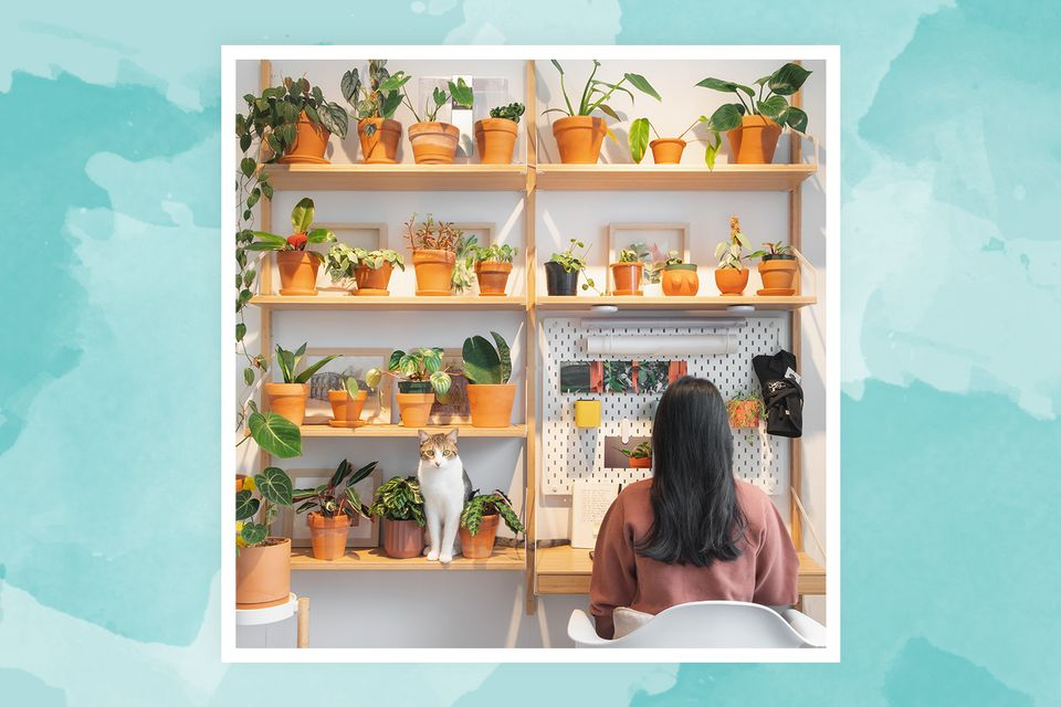 Vionna Wai, founder of @FelineJungle, works near her wall of plants in her home workspace