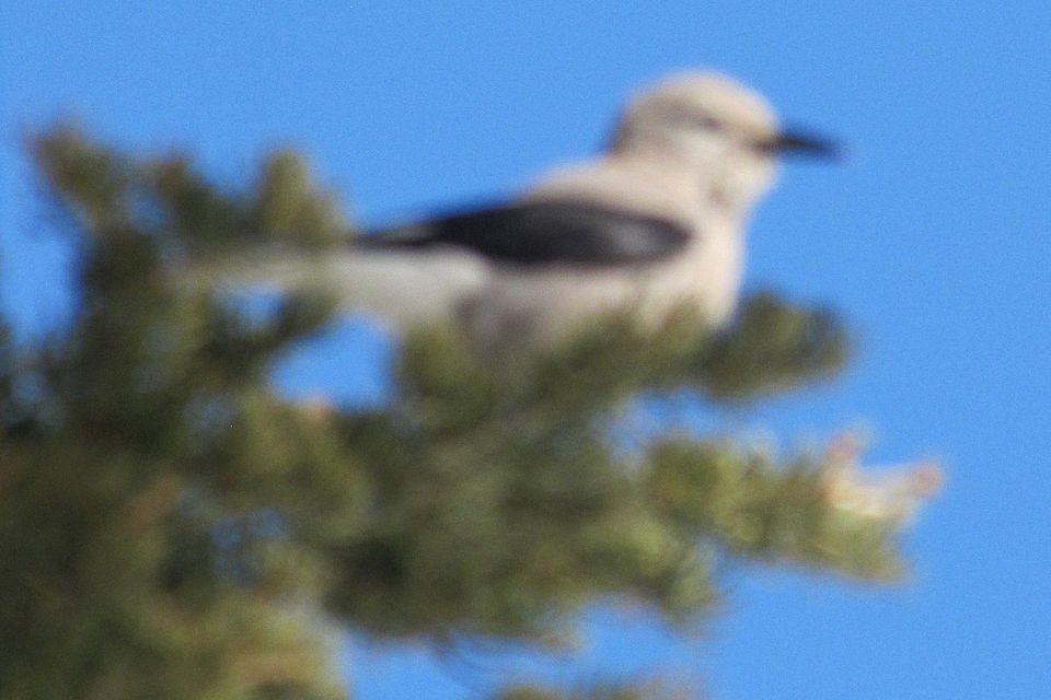blurry-clark.jpg