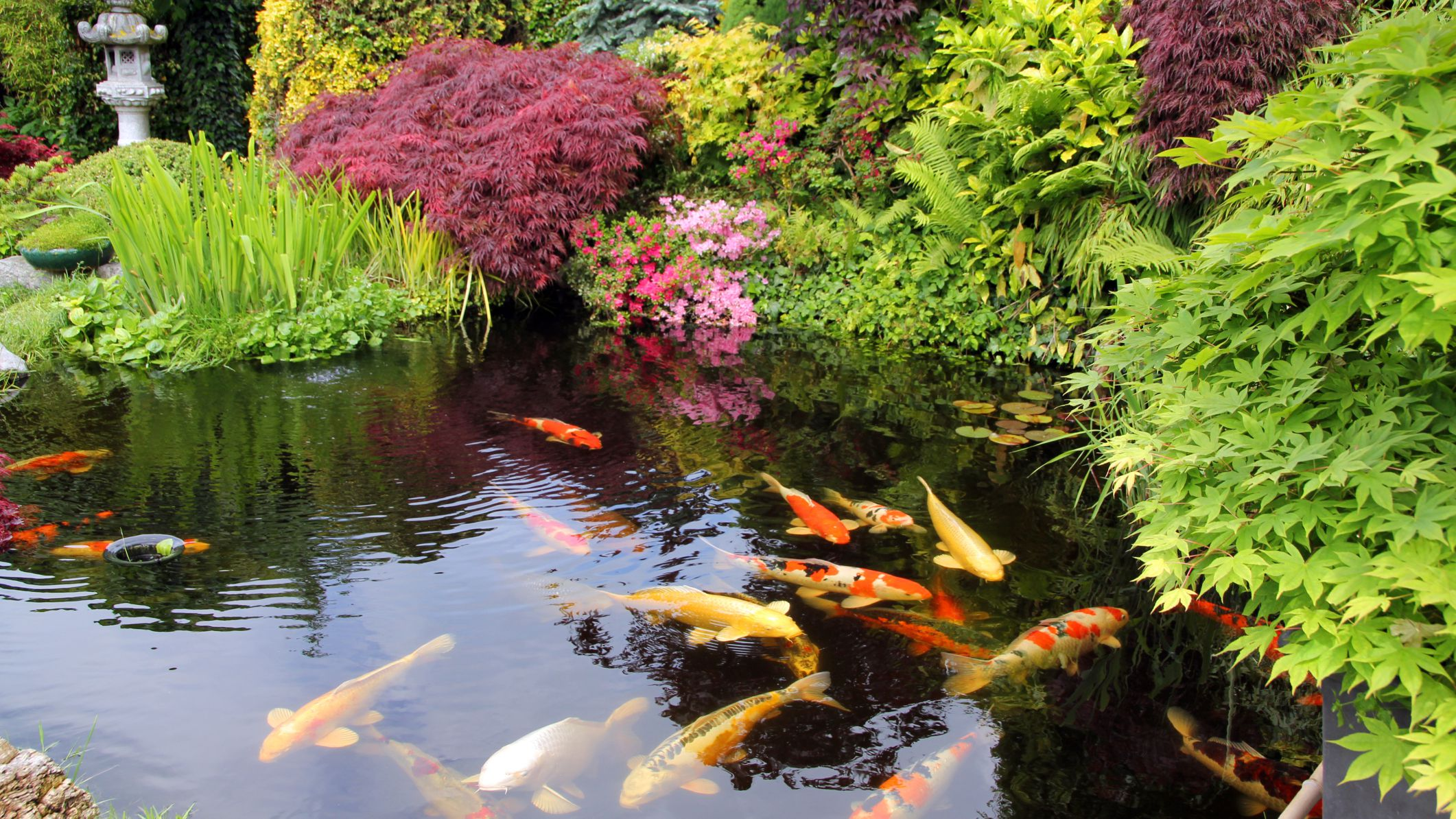 10 Garden Pond Building Tips