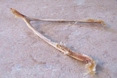 Wishbone - What Is a Bird's Furcula - Anatomy