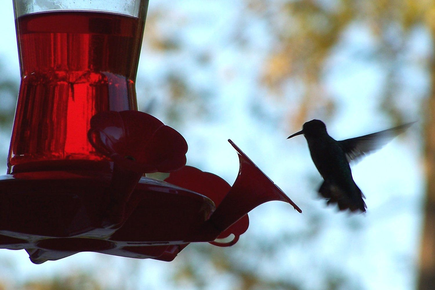 Hummingbird Visiting a Feeder