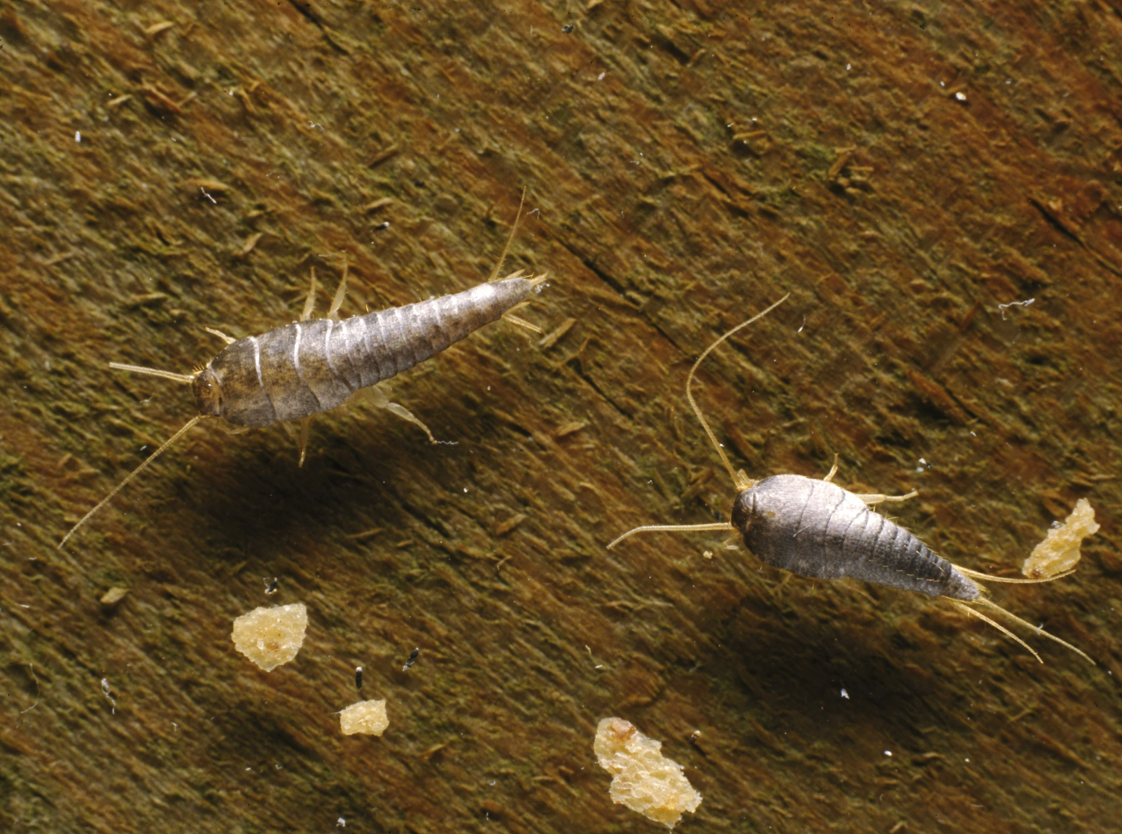 Identify 8 Insects That Eat Holes in Clothes