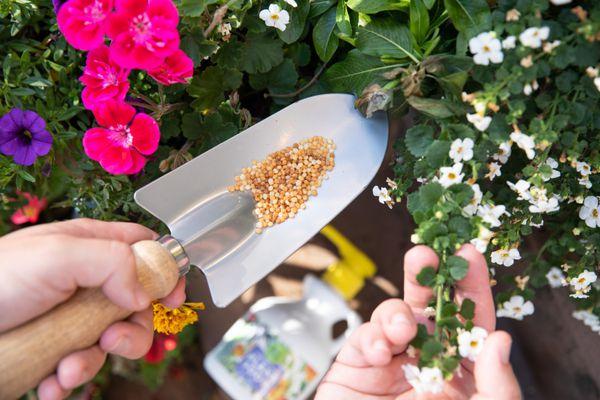 person applying plant fertilizer