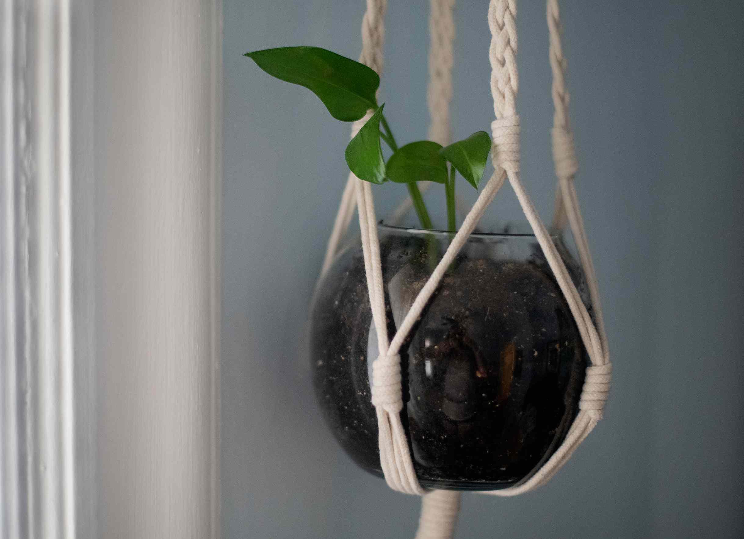 planta de interior en un rincón oscuro