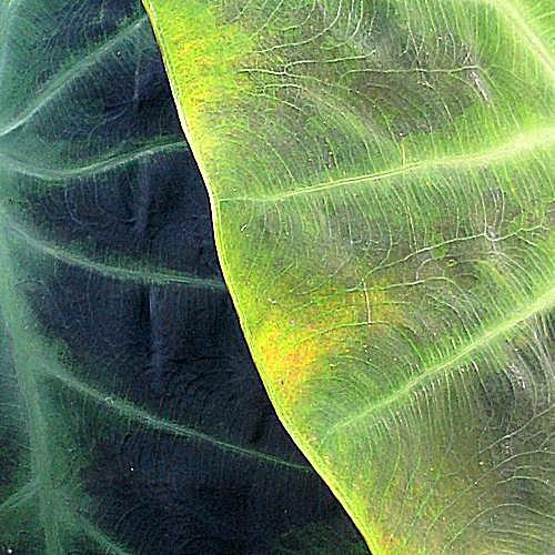 imagen de jardinería en macetas de macetero de calabaza con pelo de gravilla