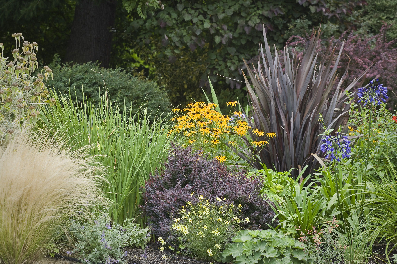 landscape with ornamental grasses