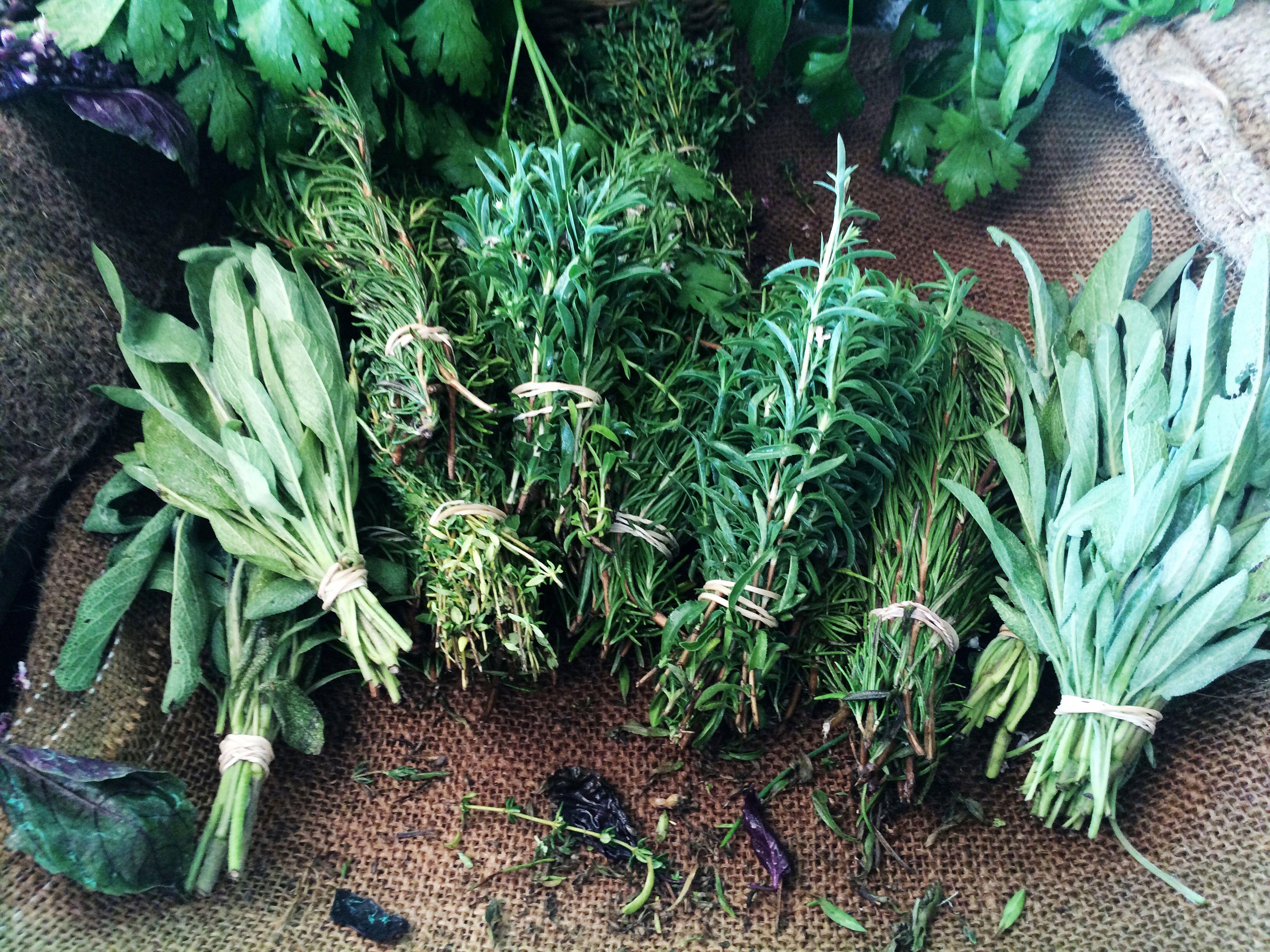 The 7 Best Herb Garden Kits Of 2020