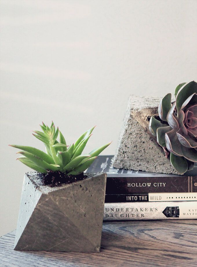 Concrete planters holding succulents