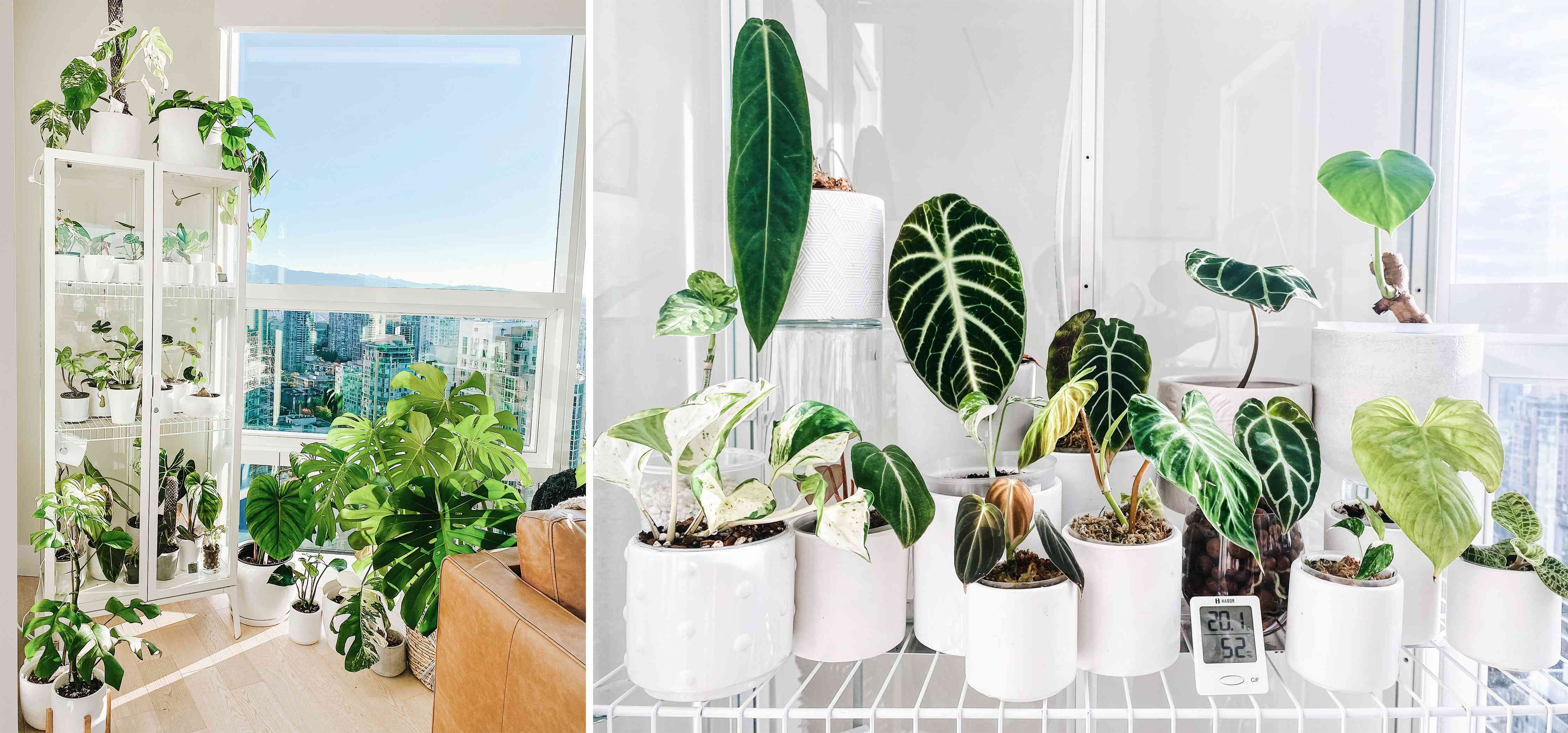 Erin Bishop's IKEA Milsbo cabinet greenhouse hack in Vancouver that features anthuriums, philodendrons, and alocasias
