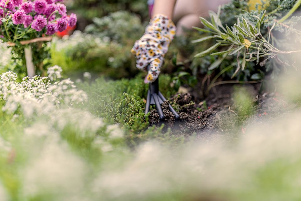 Woman using a garden tool to plant flowers.