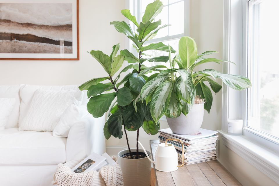 plants in a living room
