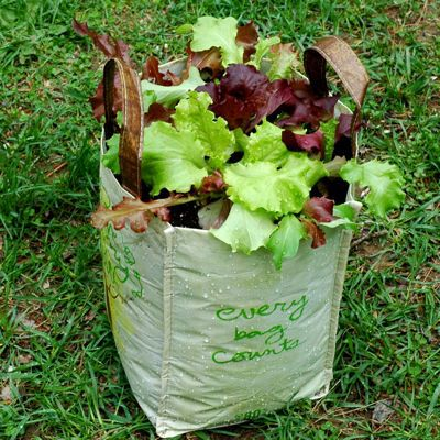 A reusable grocery bag container garden