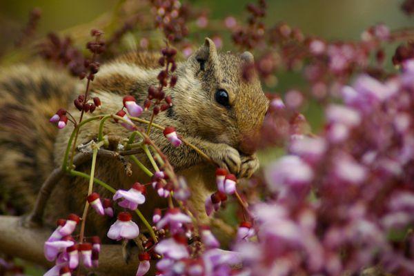 Squirrel enjoying the Springtime