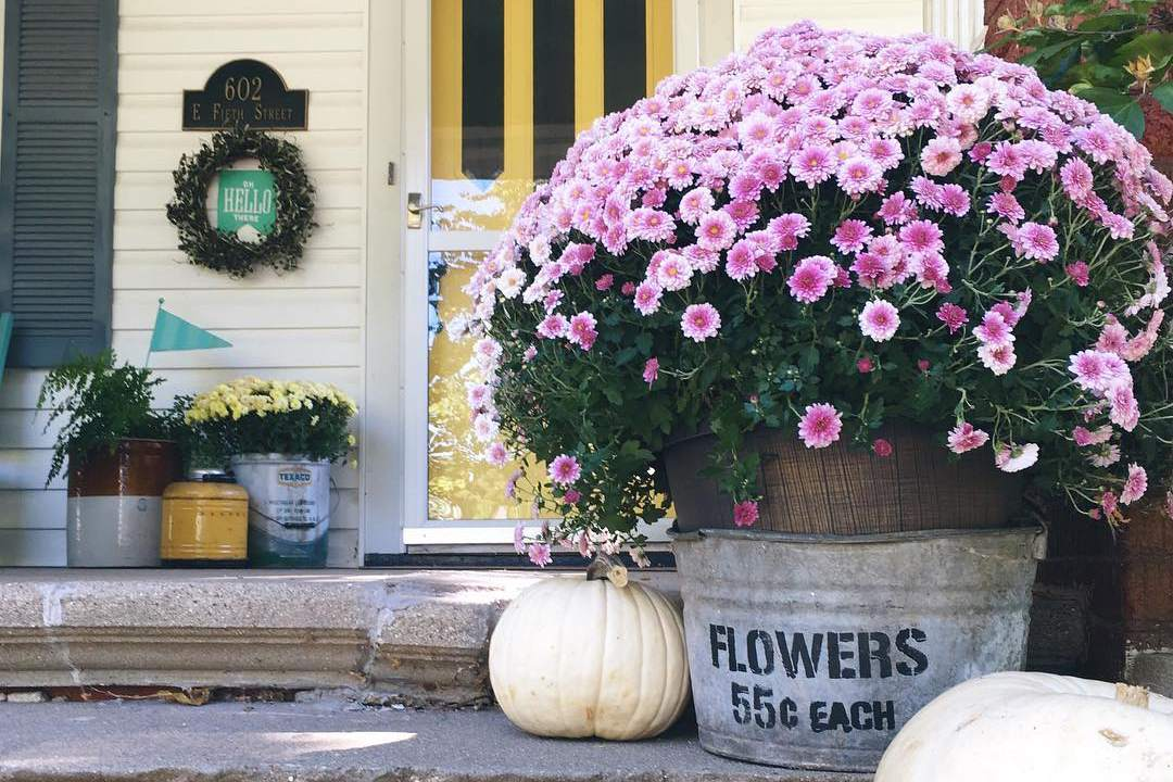 flores de otoño púrpura Porche de mamá