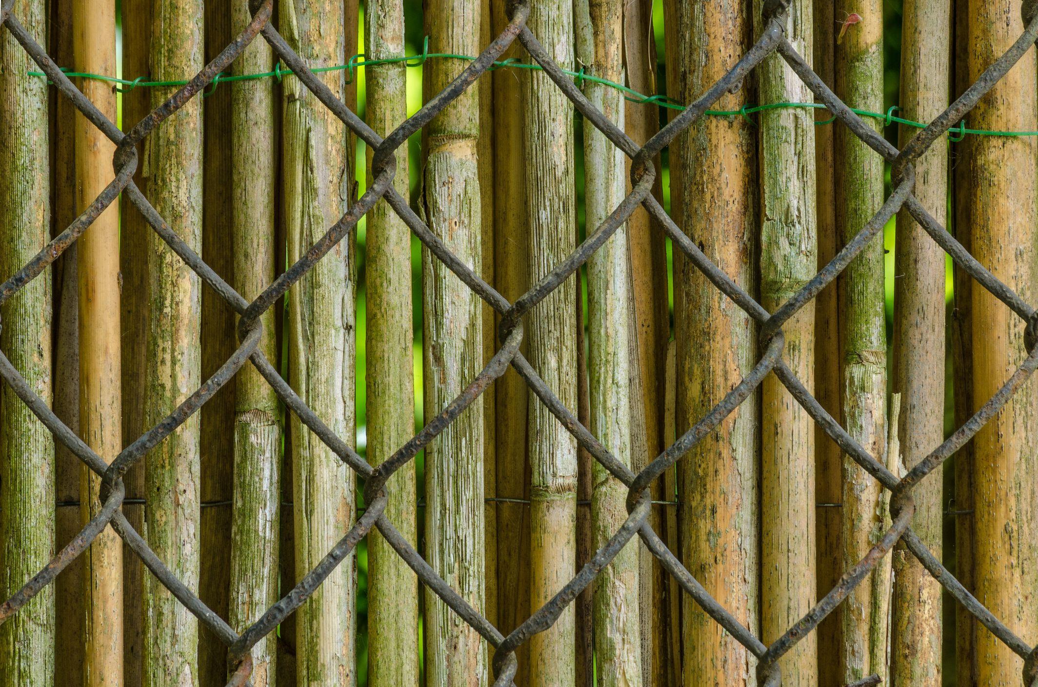 Cerca de bambú sobre cerca de eslabones de cadena