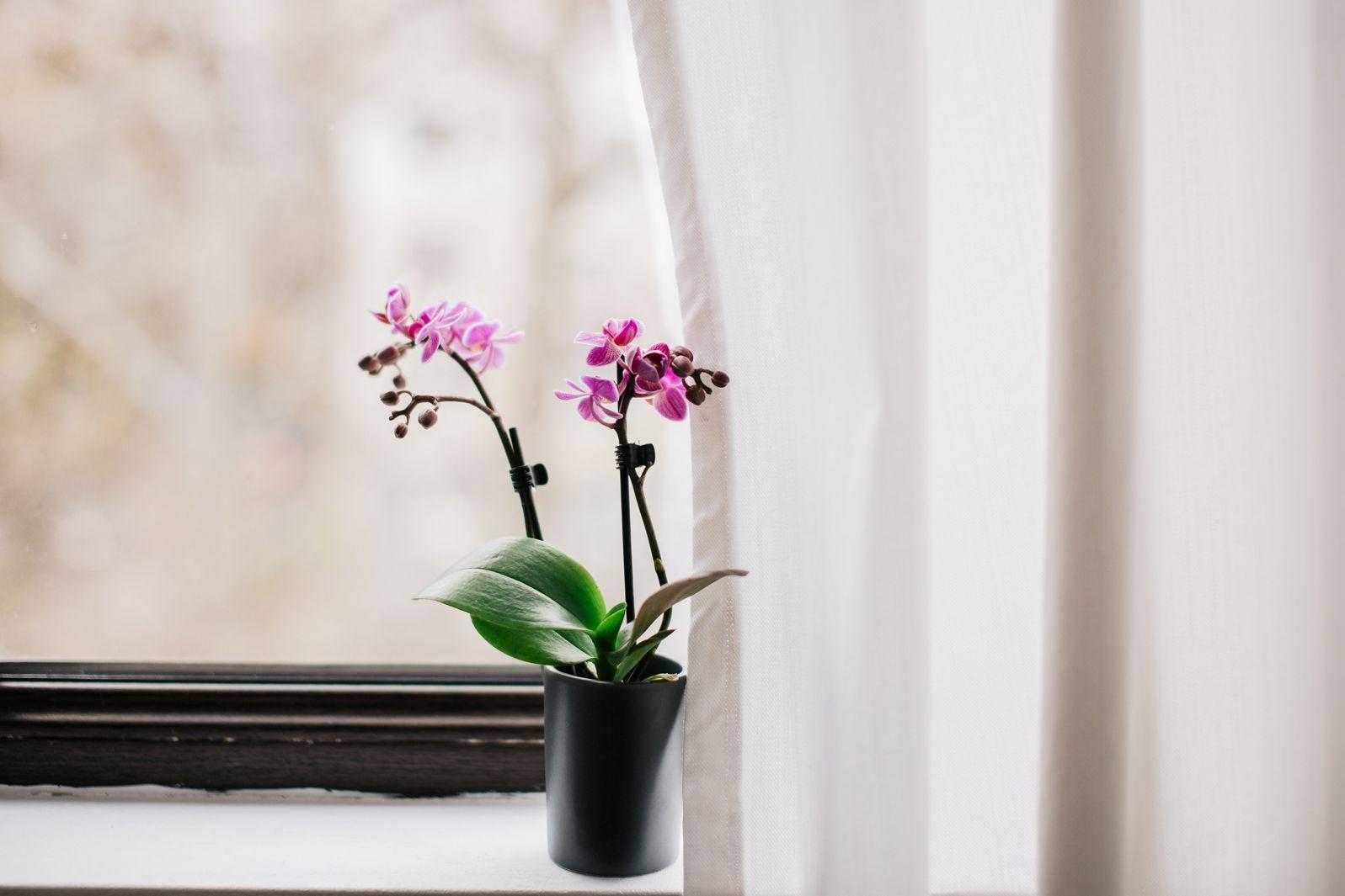 una orquídea en el alféizar de la ventana