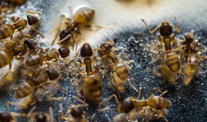 Ants feeding on food on the floor