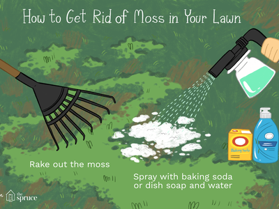 illustration of how to get rid of moss in your lawn