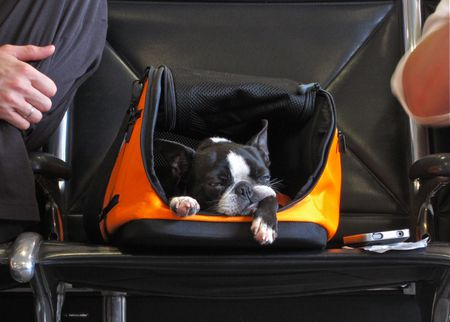 International Travel Tips For Flying With A Pet