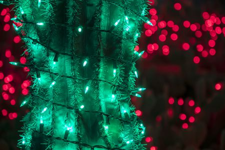Green Christmas Lights.How To Decorate Cactus And Succulents With Lighting