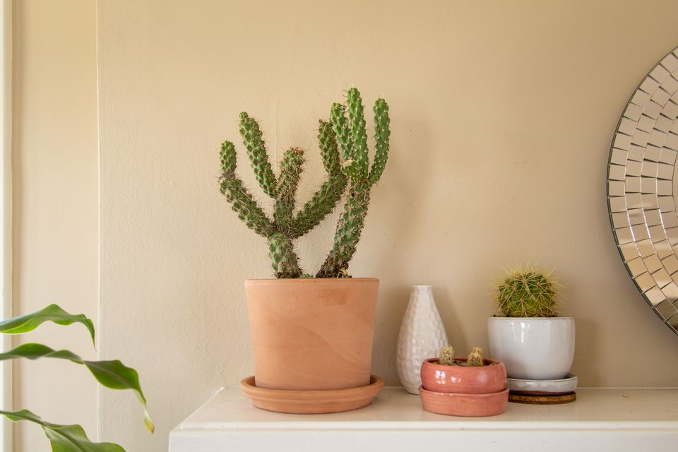 cholla cactus on a mantel