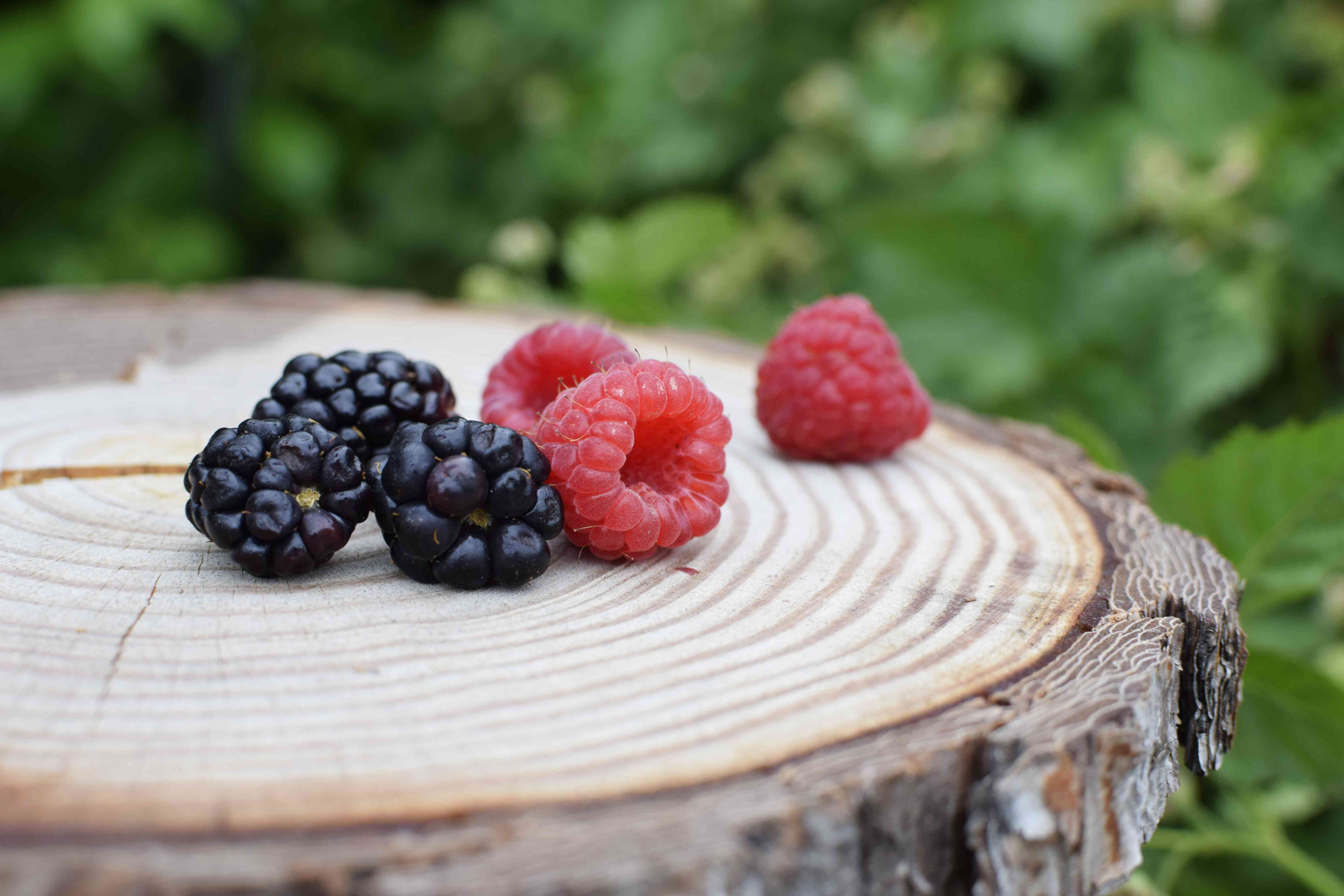 Dark purple and red blackberry fruit on cut tree surface