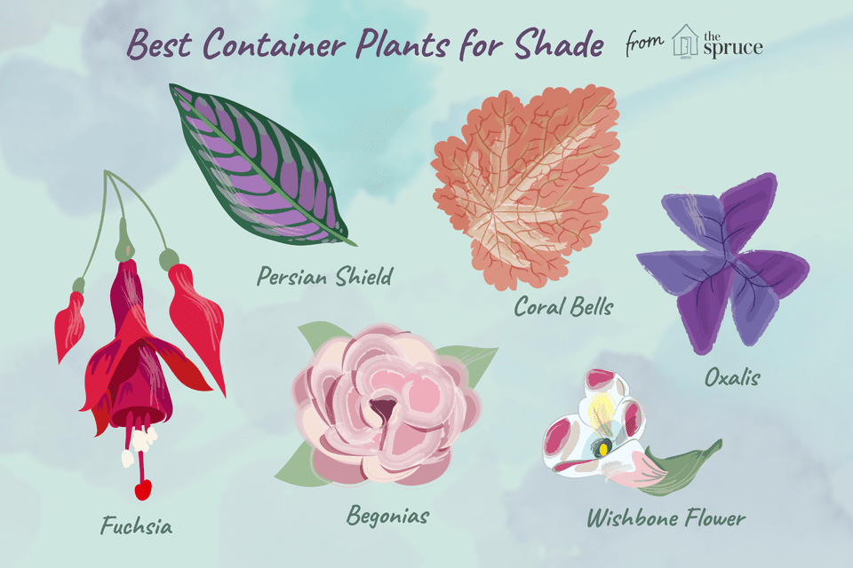 illustration of best container plants for shade