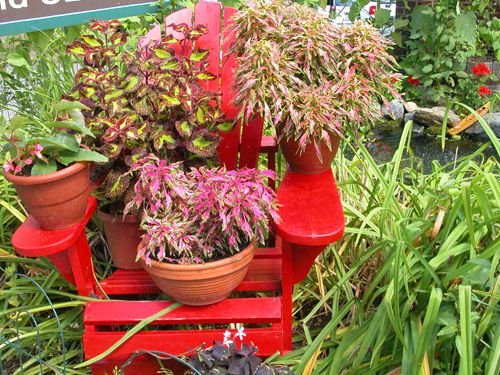 Colorful potted plants on a red chair.