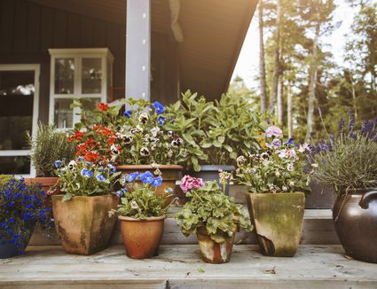 A stoop with container gardens