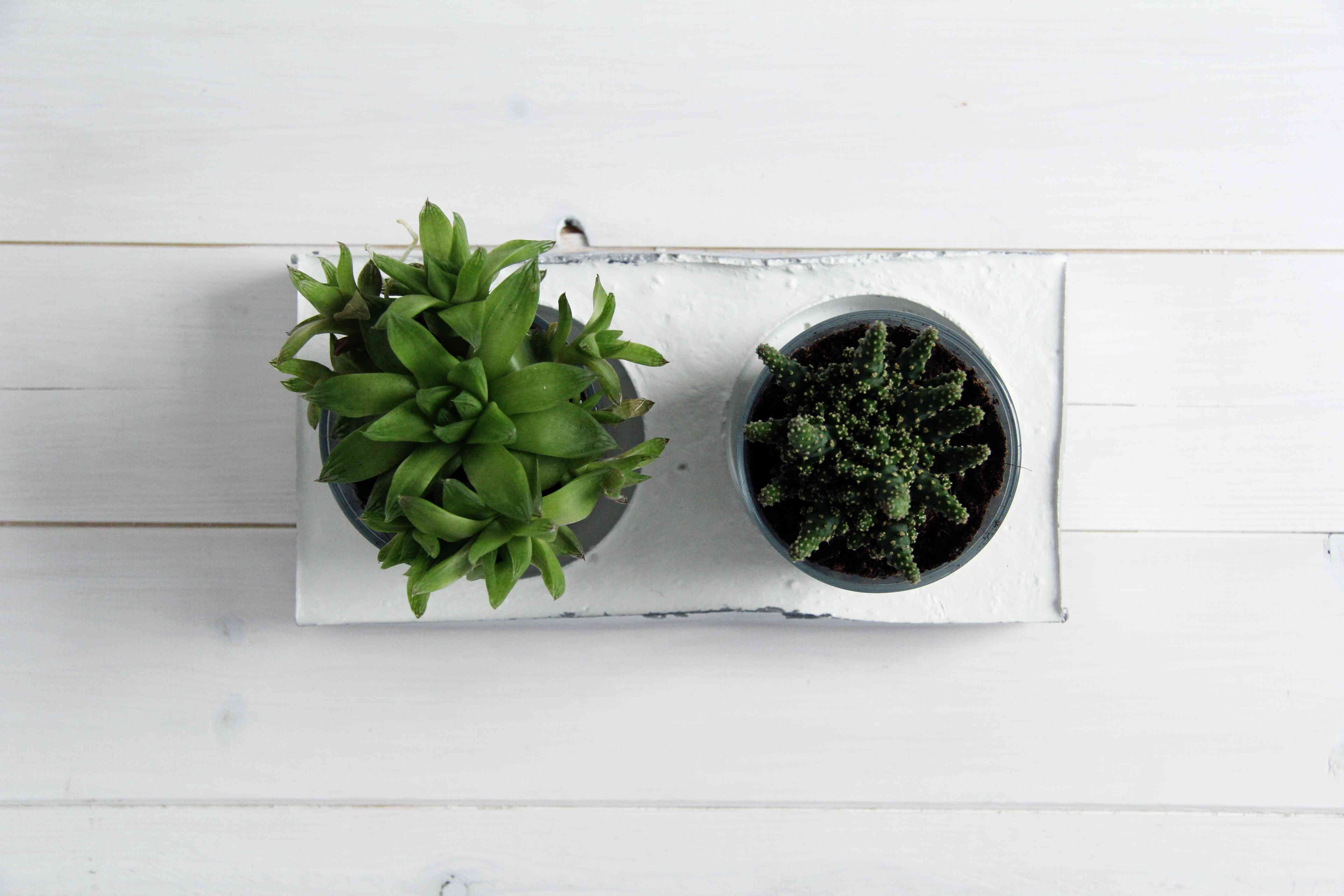 An overhead view of a concrete planter with two plants