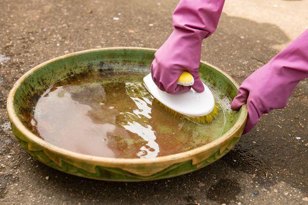 cleaning a bird bath