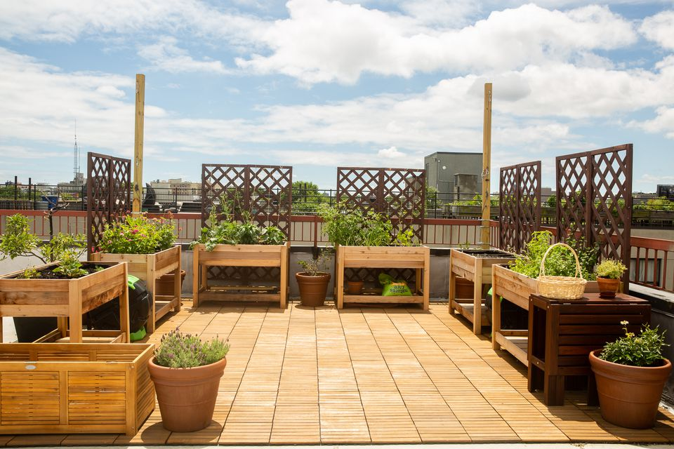 Rooftop with raised garden beds and trellis and plants in sunlight