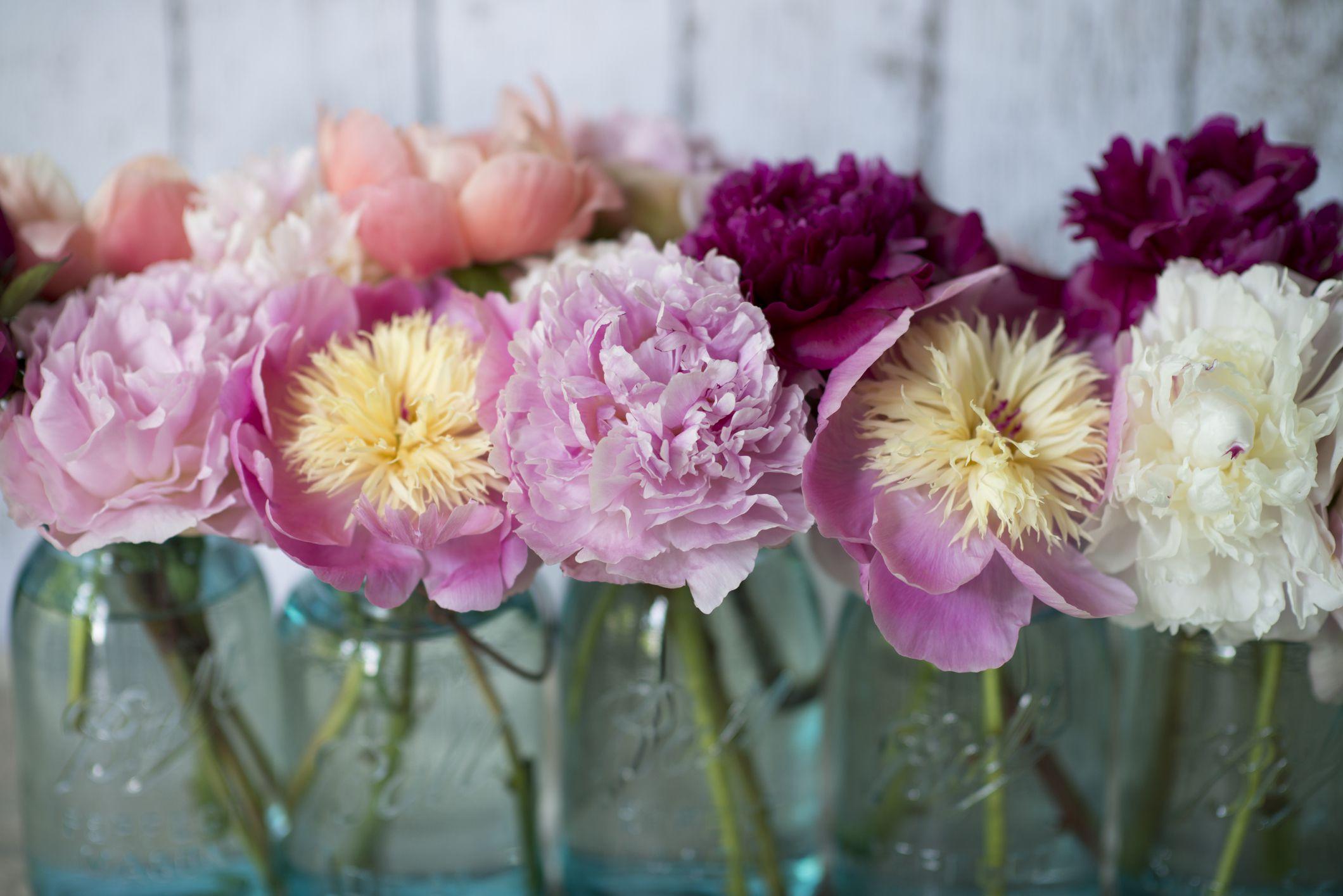 15 Beautiful Peony Varieties