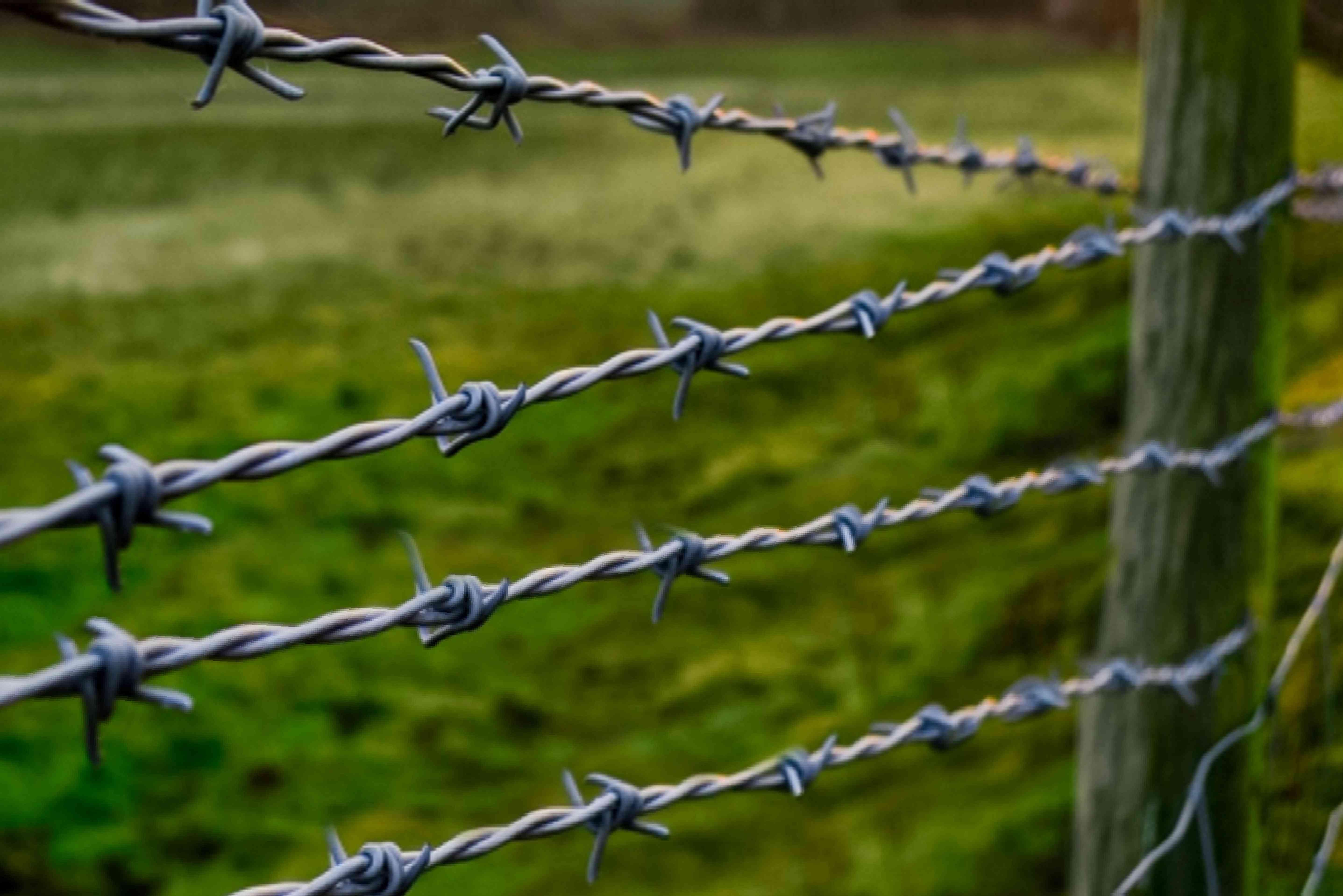 fencing can keep garden pests away
