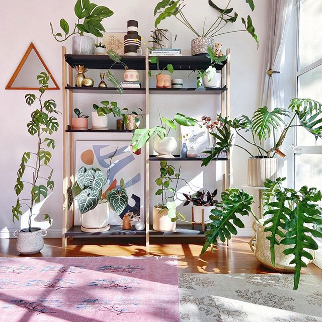 Bookcase filled with plants