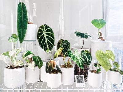 Some of Erin Bishop's plant collection are displayed in an IKEA cabinet she DIYed into a greenhouse