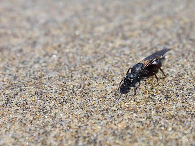 How To Get Rid Of Drain Flies Indoors Or Outside