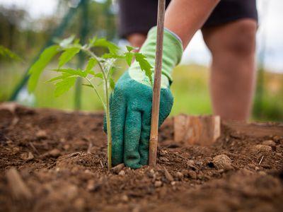 seeds-gardening