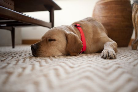 Pet Odor Removal Carpet Cleaning