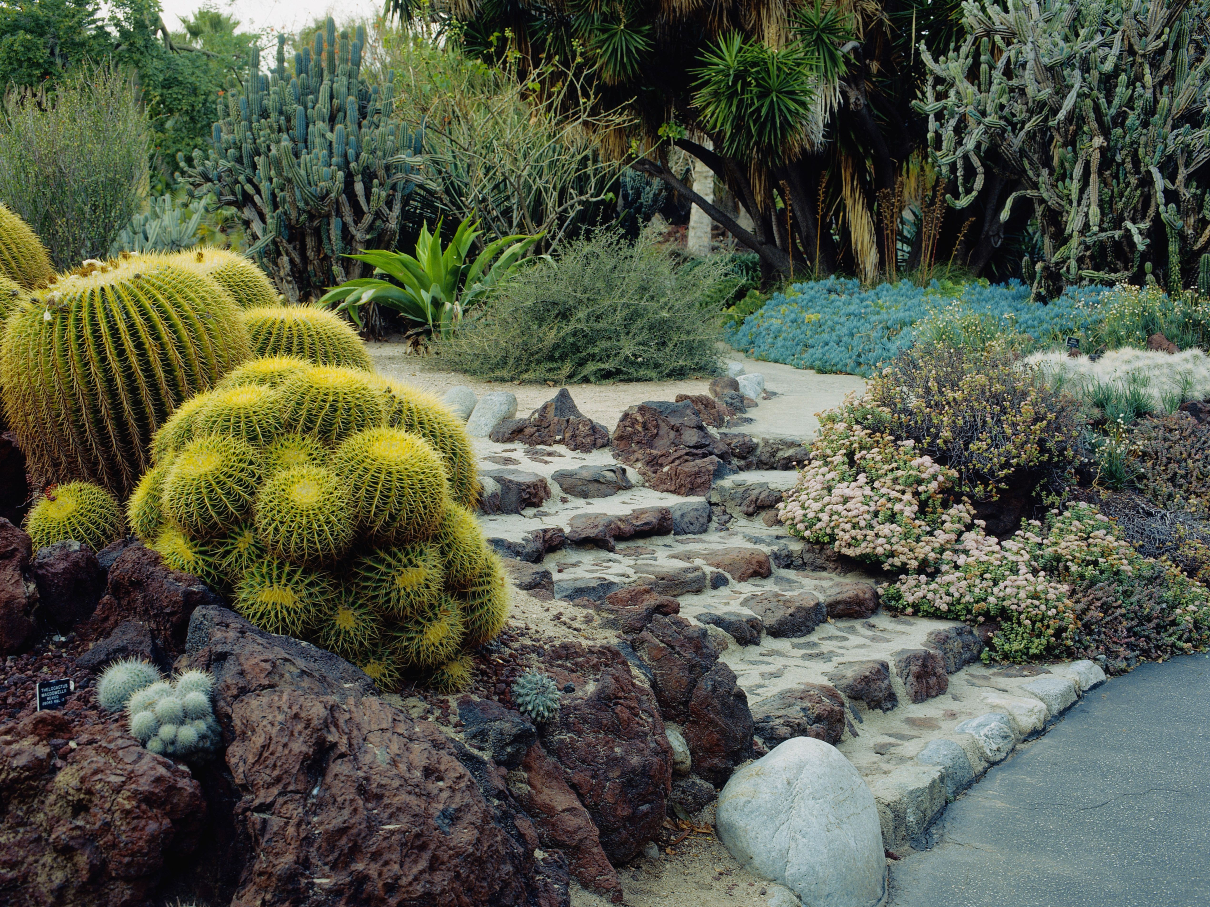 What Is Drought Tolerant Gardening