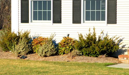 Example of how shrubs can hide pipes on house walls.