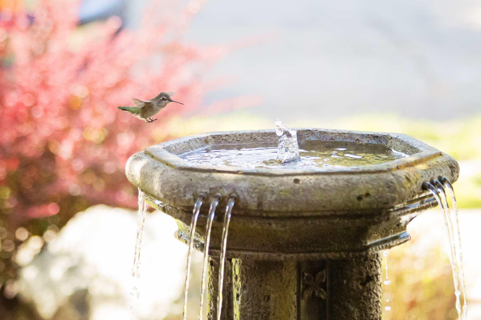 Hummingbird landing on a fountain