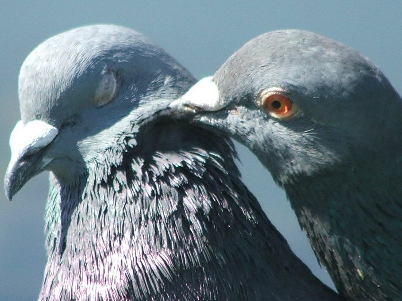 Do Birds Have Feelings and Emotions?