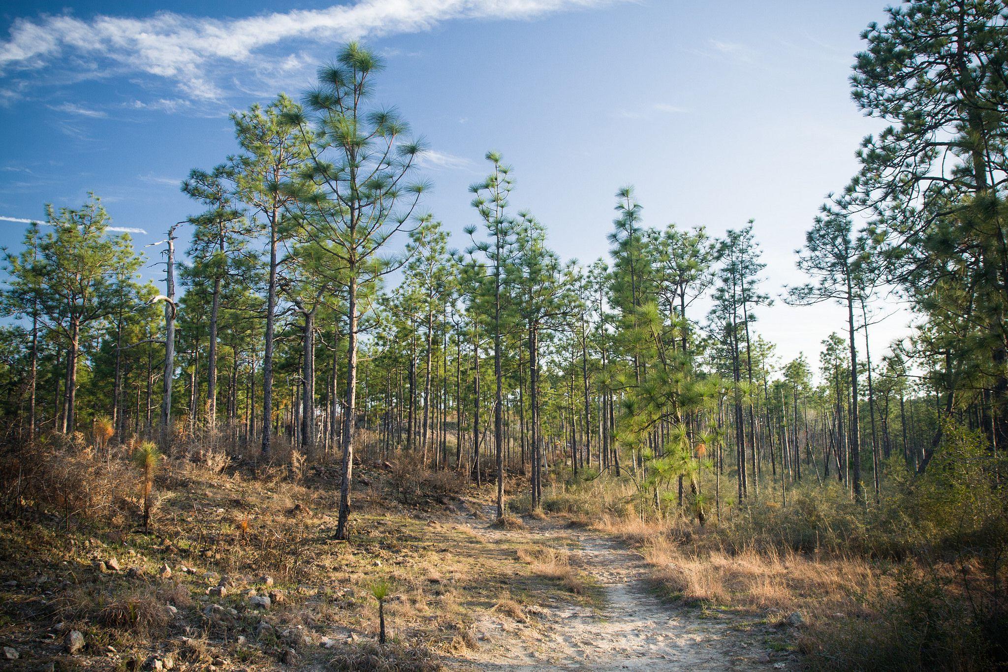 Tamarack Nature Center Hike