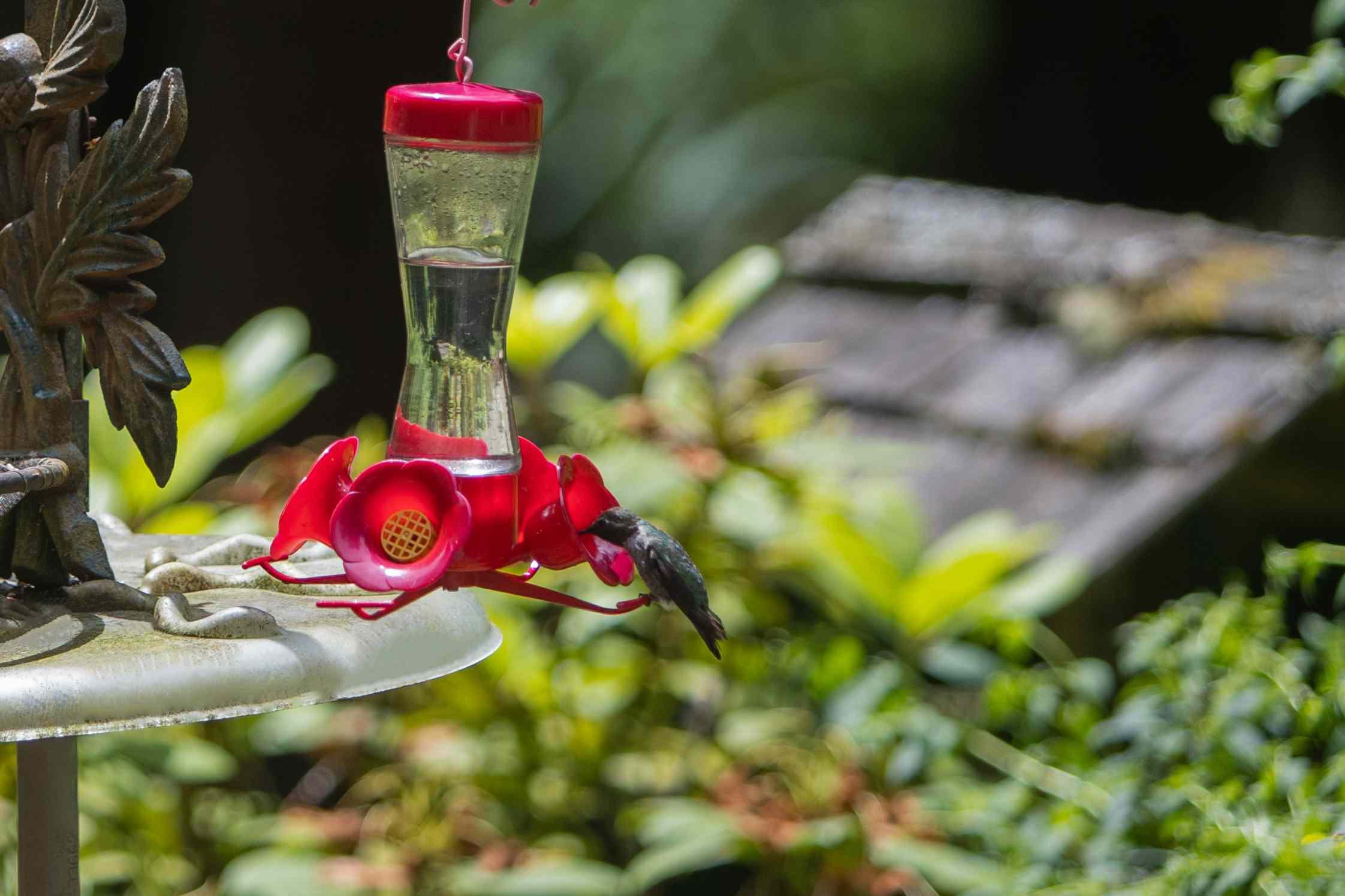 bird transitioning to a new feeder