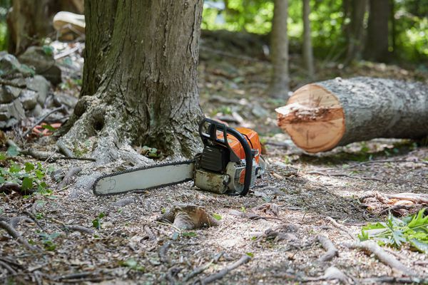 Tree trunk bucked up next to orange chainsaw in wooden area