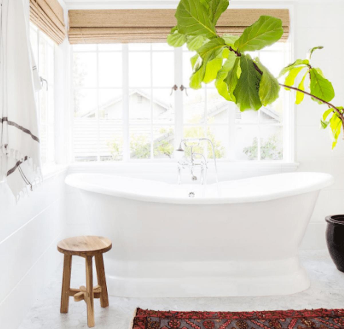 Planta en el baño