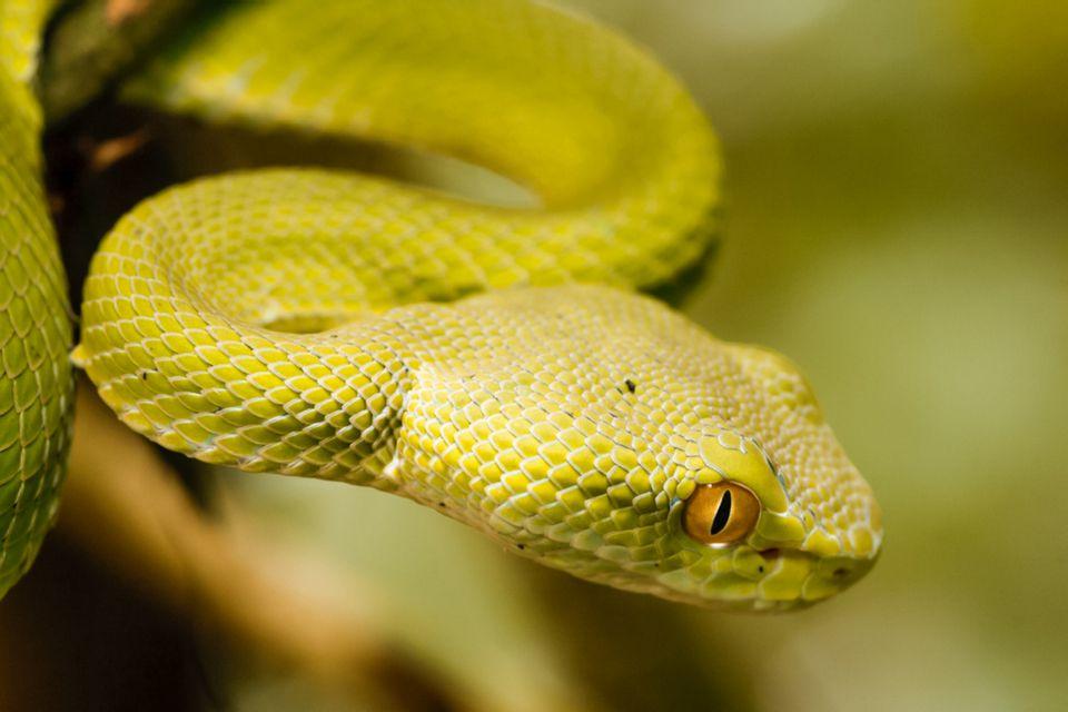 closeup of a snake