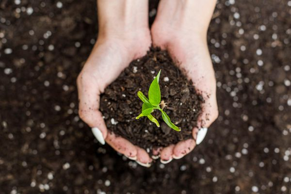 handful of soil with seedling
