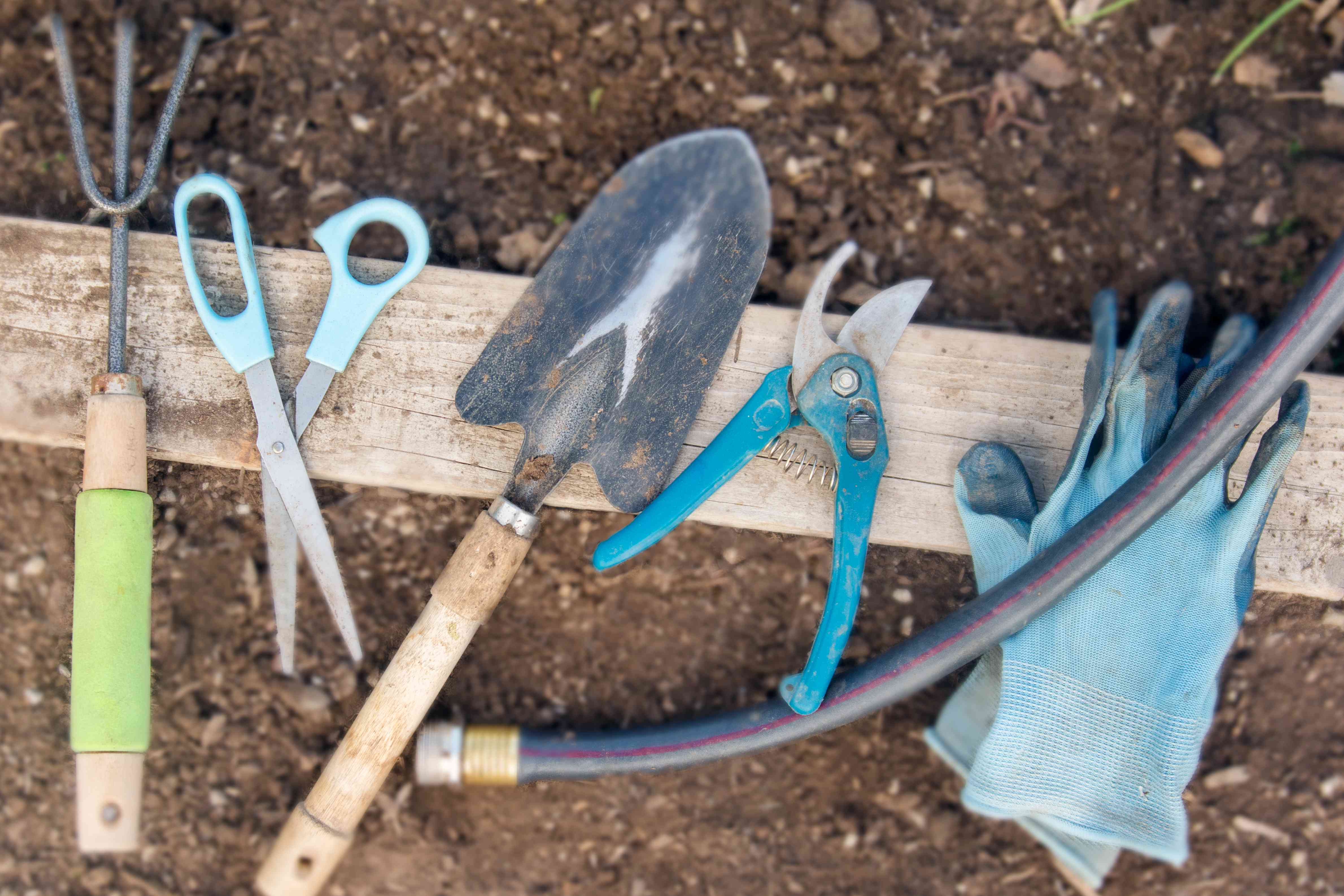 Materials and tools to divide bearded iris plants